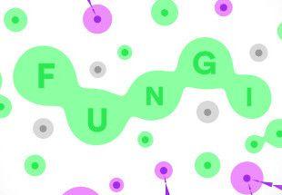 FUNGI - PC